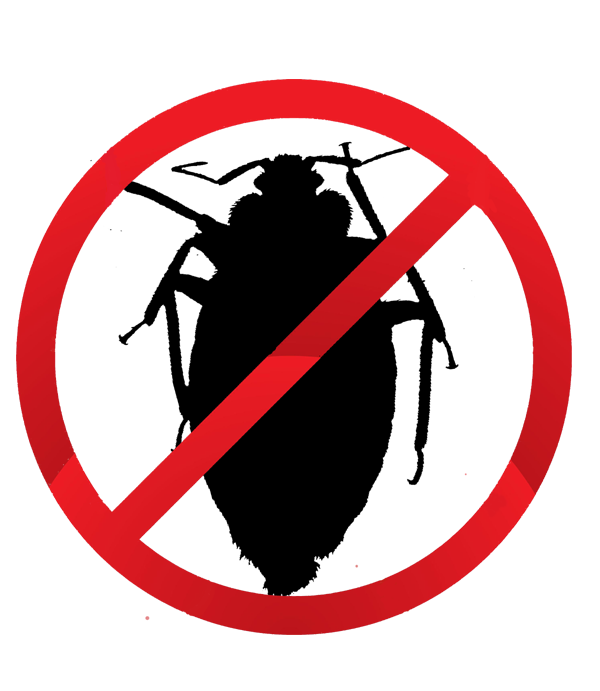 superior bed bug solutions,