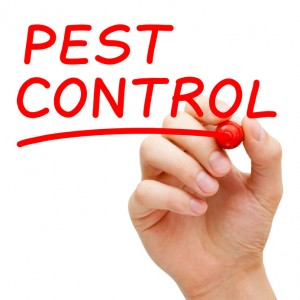 thermal bed bug treatment